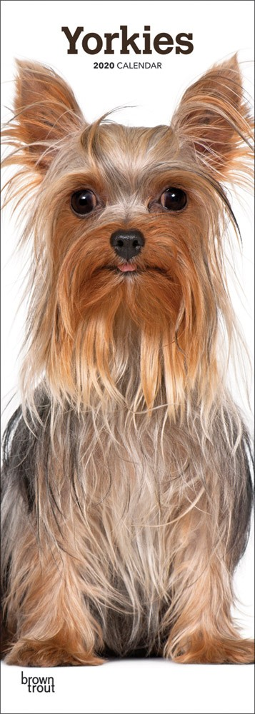 Yorkies 2020 6.75 x 16.5 Inch Monthly Slimline Wall Calendar, Dog Canine Yorkshire Terriers