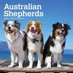 Australian Shepherds 2020 7 x 7 Inch Monthly Mini Wall Calendar, Animals Dog Breeds