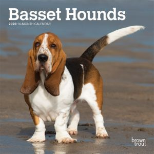 Basset Hounds 2020 7 x 7 Inch Monthly Mini Wall Calendar, Animals Dog Breeds Hound