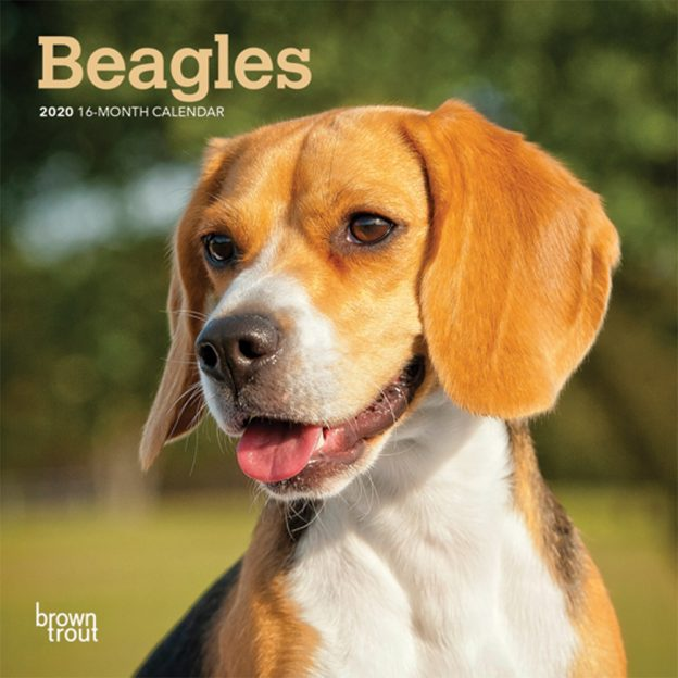Beagles 2020 7 x 7 Inch Monthly Mini Wall Calendar, Animals Dog Breeds