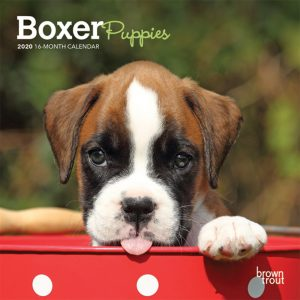 Boxer Puppies 2020 7 x 7 Inch Monthly Mini Wall Calendar, Animals Dog Breeds Puppies