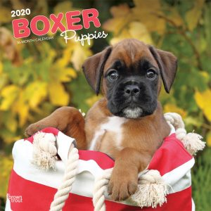 Boxer Puppies 2020 12 x 12 Inch Monthly Square Wall Calendar, Animals Dog Breeds Puppies