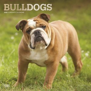 Bulldogs 2020 12 x 12 Inch Monthly Square Wall Calendar with Foil Stamped Cover, Animals Dog Breeds Terriers