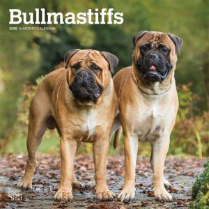Bullmastiffs 2020 12 x 12 Inch Monthly Square Wall Calendar, Animals Dog Breeds