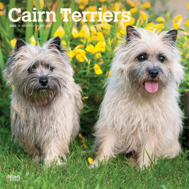 Cairn Terriers 2020 12 x 12 Inch Monthly Square Wall Calendar, Animals Dog Breeds Terriers