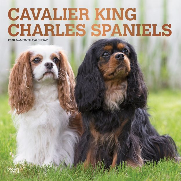 Cavalier King Charles Spaniels 2020 12 x 12 Inch Monthly Square Wall Calendar with Foil Stamped Cover, Animals Dog Breeds Puppies