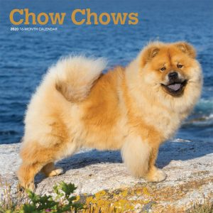 Chow Chows 2020 12 x 12 Inch Monthly Square Wall Calendar, Animals Dog Breeds