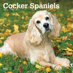 Cocker Spaniels 2020 12 x 12 Inch Monthly Square Wall Calendar, Animals Mixed Dog Breeds