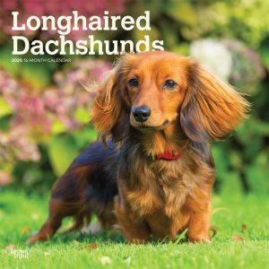 Longhaired Dachshunds 2020 12 x 12 Inch Monthly Square Wall Calendar, Animals Dog Breeds