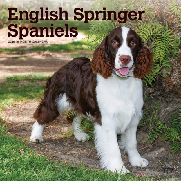 English Springer Spaniels 2020 12 x 12 Inch Square Wall Calendar, Animals Dog Breeds