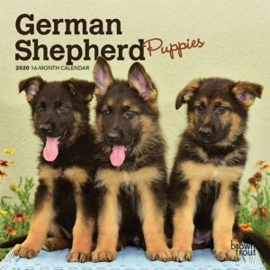 German Shepherd Puppies 2020 7 x 7 Inch Monthly Mini Wall Calendar, Animals Dog Breeds Puppies