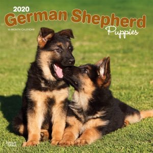 German Shepherd Puppies 2020 12 x 12 Inch Monthly Square Wall Calendar, Animals Dog Breeds Puppies