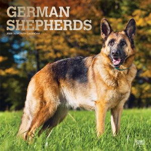 German Shepherds 2020 12 x 12 Inch Monthly Square Wall Calendar with Foil Stamped Cover, Animals Dog Breeds
