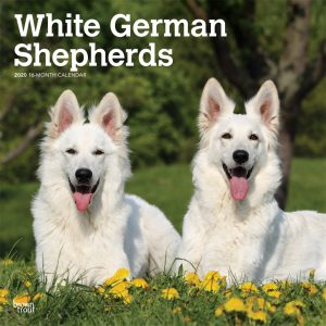 White German Shepherds 2020 12 x 12 Inch Monthly Square Wall Calendar, Animals Dog Breeds