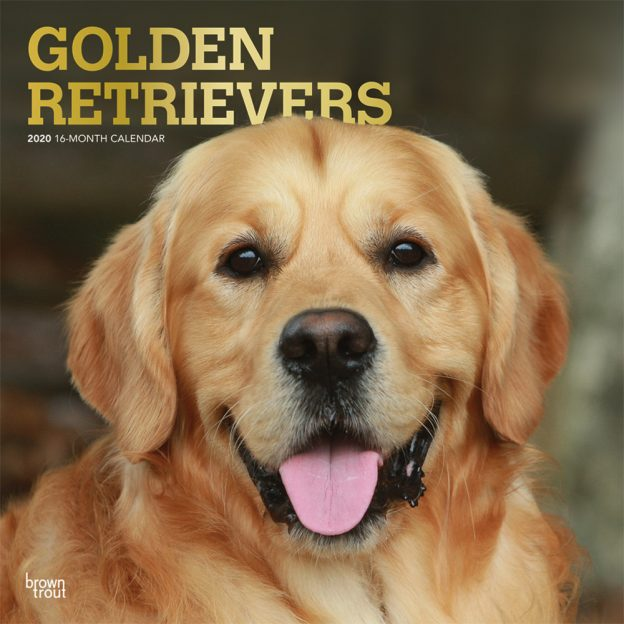 Golden Retrievers 2020 12 x 12 Inch Monthly Square Wall Calendar with Foil Stamped Cover, Animals Dog Breeds Retriever