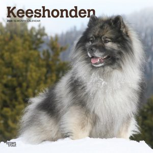 Keeshonden 2020 12 x 12 Inch Monthly Square Wall Calendar, Animals Dog Breeds