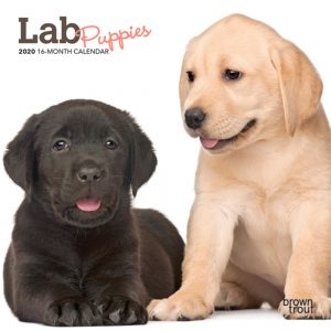 Lab Puppies 2020 7 x 7 Inch Monthly Mini Wall Calendar, Animals Dog Breeds Puppies