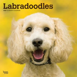 Labradoodles 2020 12 x 12 Inch Monthly Square Wall Calendar, Animals Mixed Dog Breeds