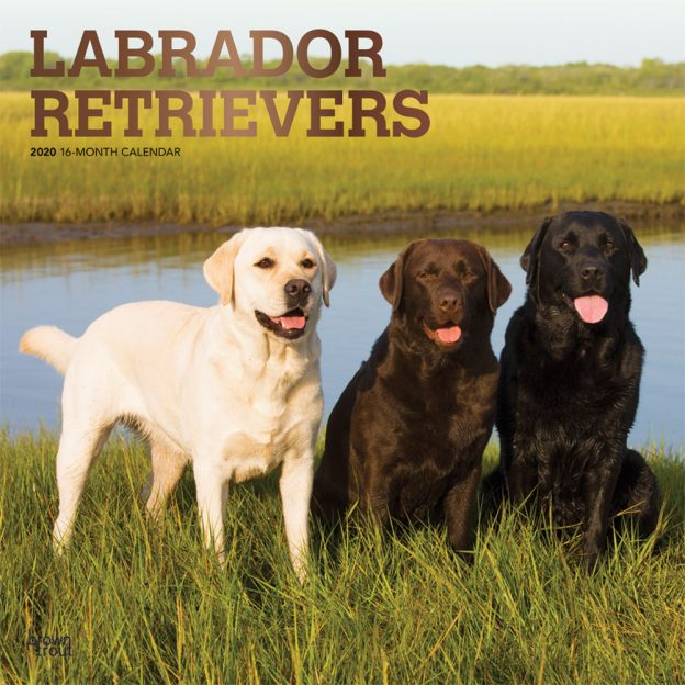 Labrador Retrievers 2020 12 x 12 Inch Monthly Square Wall Calendar with Foil Stamped Cover, Animals Dog Breeds Retriever