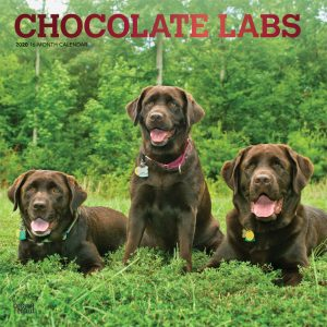 Chocolate Labrador Retrievers 2020 12 x 12 Inch Monthly Square Wall Calendar with Foil Stamped Cover, Animals Dog Breeds Retriever