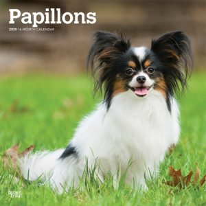Papillons 2020 12 x 12 Inch Monthly Square Wall Calendar, Animals French Dog Breeds