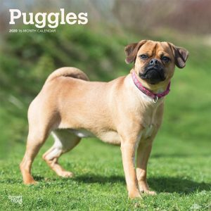 Puggles 2020 12 x 12 Inch Monthly Square Wall Calendar, Animals Mixed Dog Breeds