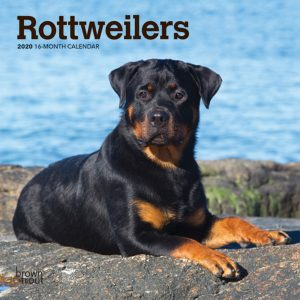 Rottweilers 2020 7 x 7 Inch Monthly Mini Wall Calendar, Animals Dog Breeds
