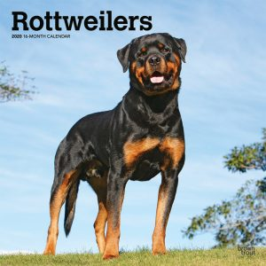 Rottweilers 2020 12 x 12 Inch Monthly Square Wall Calendar, Animals Dog Breeds
