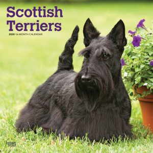Scottish Terriers 2020 12 x 12 Inch Monthly Square Wall Calendar, Animals Dog Breeds