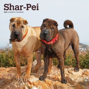 Shar Pei 2020 12 x 12 Inch Monthly Square Wall Calendar, Animals Dog Breeds