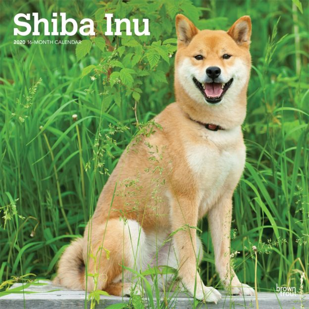 Shiba Inu 2020 12 x 12 Inch Monthly Square Wall Calendar, Animals Asian Dog Breeds