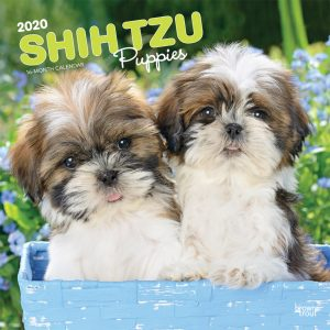 Shih Tzu Puppies 2020 12 x 12 Inch Monthly Square Wall Calendar, Animal Small Dog Breed Puppies