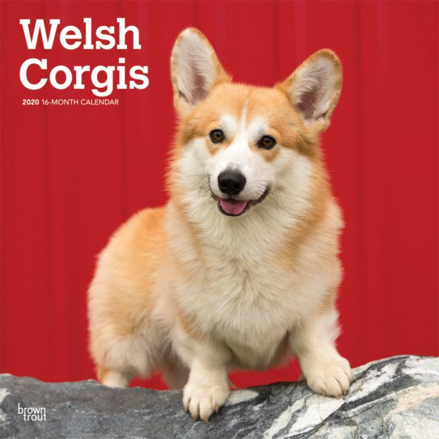 Welsh Corgis 2020 12 x 12 Inch Monthly Square Wall Calendar, Animals Dog Breeds