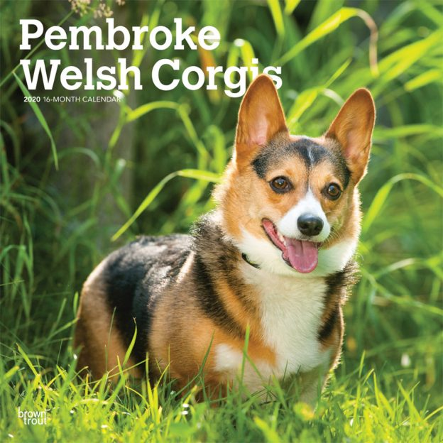 Pembroke Welsh Corgis 2020 12 x 12 Inch Monthly Square Wall Calendar, Animals Dog Breeds