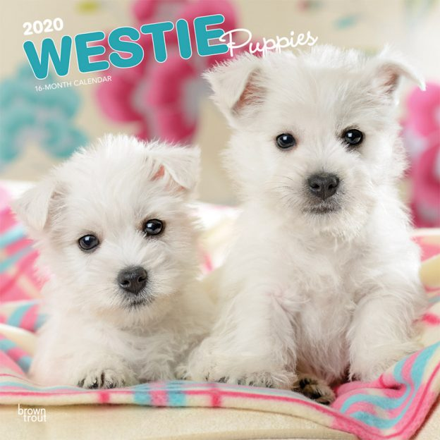 West Highland White Terrier Puppies 2020 12 x 12 Inch Monthly Square Wall Calendar, Animals Dog Breeds Terrier Puppies
