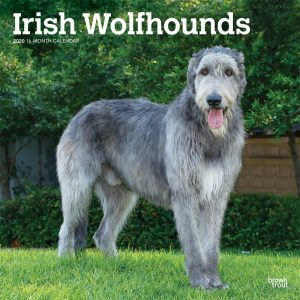 Irish Wolfhounds 2020 12 x 12 Inch Monthly Square Wall Calendar, Animals Irish Dog Breeds