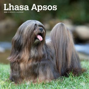 Lhasa Apsos 2020 12 x 12 Inch Monthly Square Wall Calendar, Animals Dog Breeds