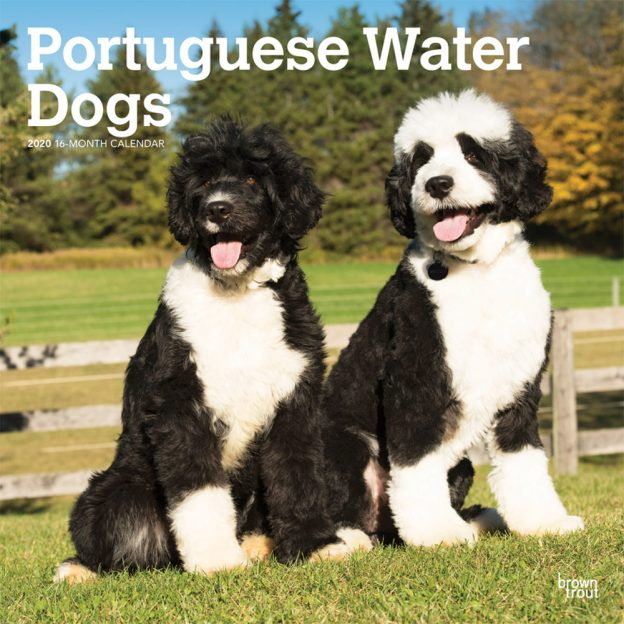 Portuguese Water Dogs 2020 12 x 12 Inch Monthly Square Wall Calendar, Animals Dog Breeds