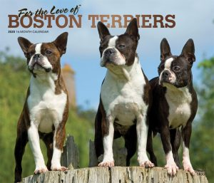 For the Love of Boston Terriers 2020 14 x 12 Inch Monthly Deluxe Wall Calendar with Foil Stamped Cover, Animal Dog Breeds
