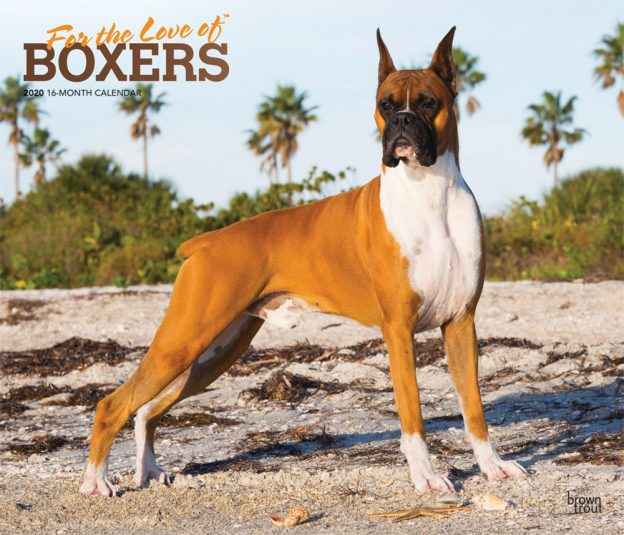 For the Love of Boxers 2020 14 x 12 Inch Monthly Deluxe Wall Calendar with Foil Stamped Cover, Animal Dog Breeds