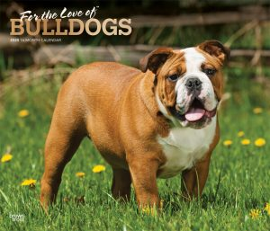 For the Love of Bulldogs 2020 14 x 12 Inch Monthly Deluxe Wall Calendar with Foil Stamped Cover, Animal Dog Breeds