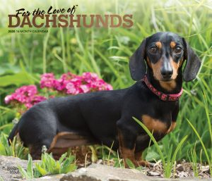 For the Love of Dachshunds 2020 14 x 12 Inch Monthly Deluxe Wall Calendar with Foil Stamped Cover, Animal Dog Breeds Dachshunds