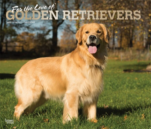 For the Love of Golden Retrievers 2020 14 x 12 Inch Monthly Deluxe Wall Calendar with Foil Stamped Cover, Animal Dog Breeds