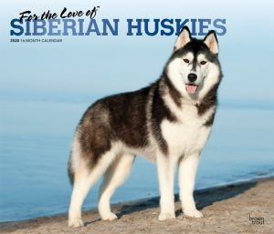 For the Love of Siberian Huskies 2020 14 x 12 Inch Monthly Deluxe Wall Calendar with Foil Stamped Cover, Animal Dog Breeds Husky