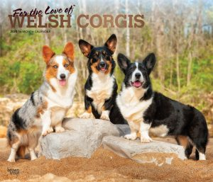For the Love of Welsh Corgis 2020 14 x 12 Inch Monthly Deluxe Wall Calendar with Foil Stamped Cover, Animal Dog Breeds Corgi