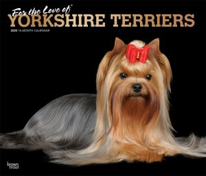 For the Love of Yorkshire Terriers 2020 14 x 12 Inch Monthly Deluxe Wall Calendar with Foil Stamped Cover, Animal Small Dog Breeds