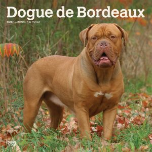 Dogue de Bordeaux 2020 12 x 12 Inch Monthly Square Wall Calendar, Animals Dog Breeds