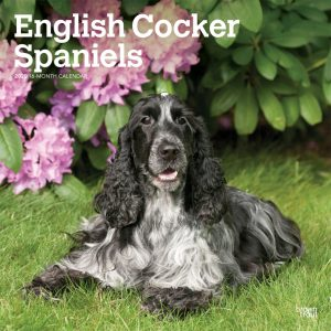 English Cocker Spaniels 2020 12 x 12 Inch Monthly Square Wall Calendar, Animals Dog Breeds