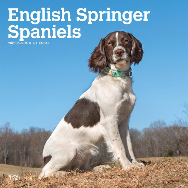 English Springer Spaniels International Edition 2020 12 x 12 Inch Monthly Square Wall Calendar, Animals Dog Breeds