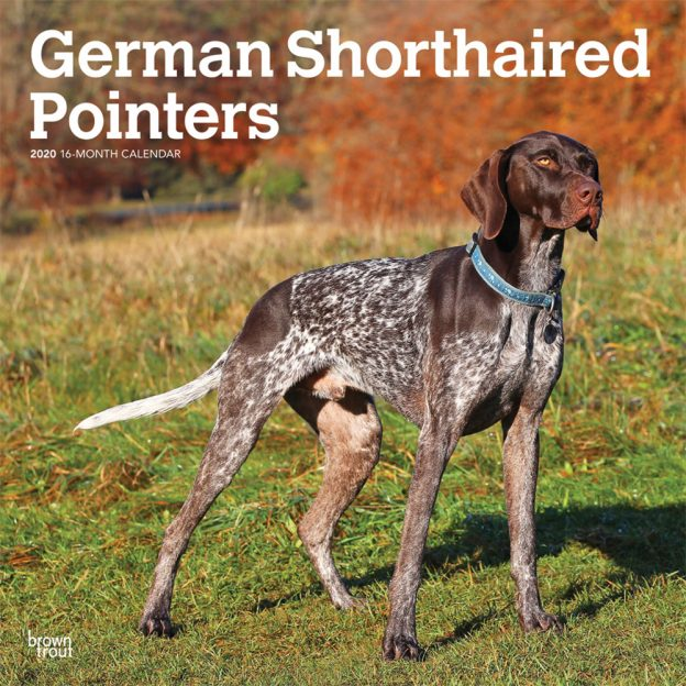 German Shorthaired Pointers International Edition 2020 12 x 12 Inch Monthly Square Wall Calendar, Animals Dog Breeds